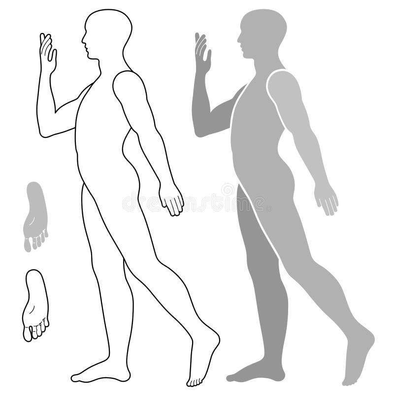 Modemandiagram vektor illustrationer