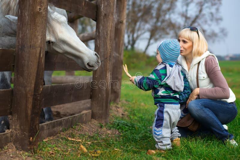 Moder med hästen för två-år barnmatning arkivfoto