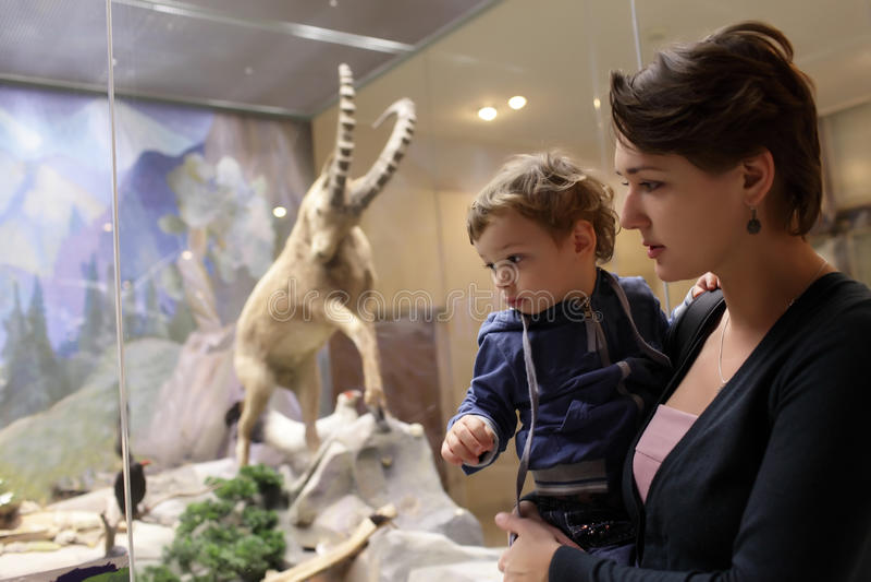 Moder med sonen på det zoologiska museet fotografering för bildbyråer