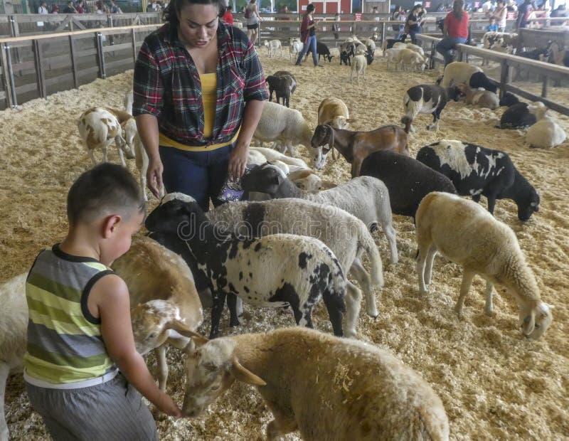 Moder och barn med getter och lamm i Los Angeles County den ganska dalta pennan royaltyfri fotografi