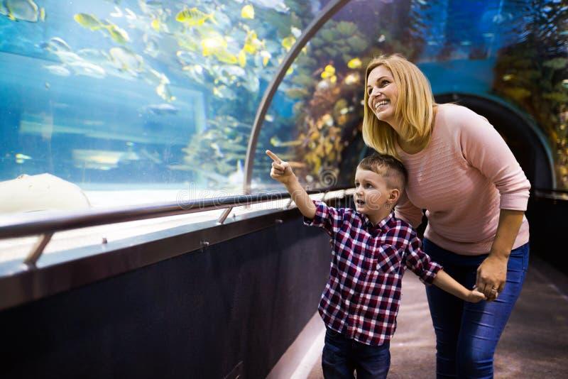 Moder och hennes hållande ögonen på havsliv för barn royaltyfri bild