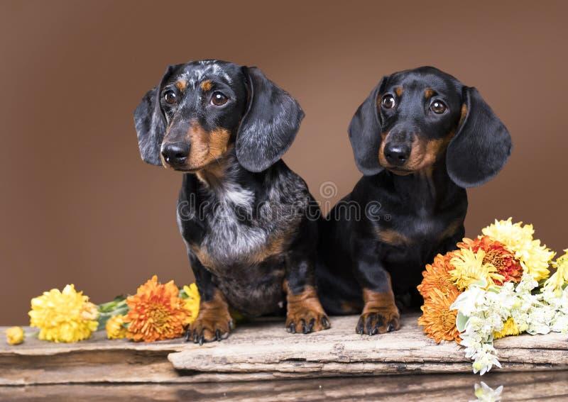 moder- och hundvalpar, svart arkivbild