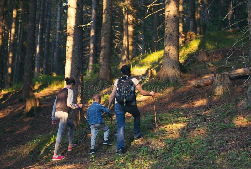 Moder, son och dotter som går i skog royaltyfria foton