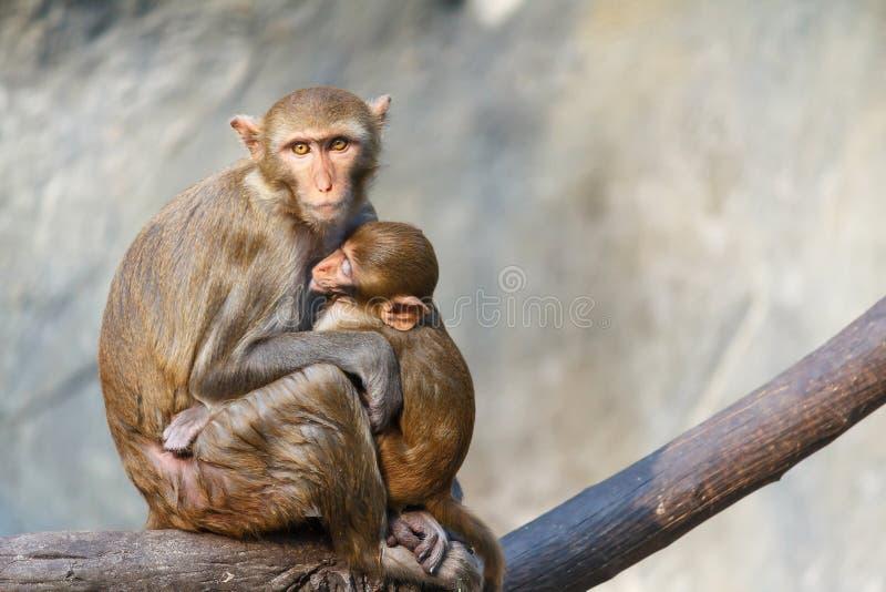 Moderapan med behandla som ett barn apasammanträde på en trädfilial royaltyfria foton