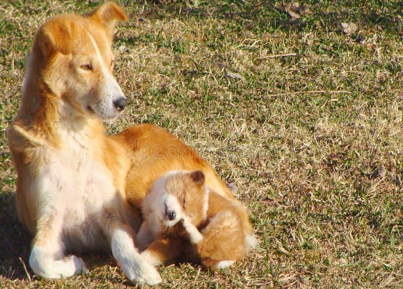 Moderhund med valpen royaltyfri foto
