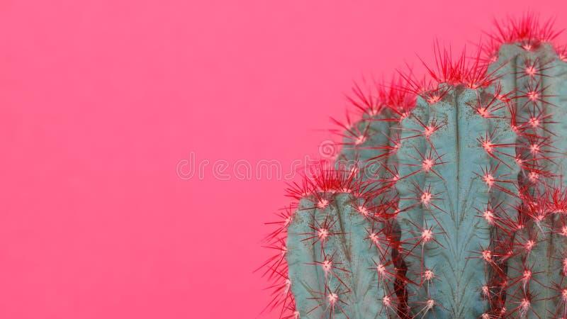 Moderiktig färgad minsta bakgrund för pastellfärgade rosa färger med kaktusväxten Kaktusväxtslut upp kvinna för stil för blåtiraf royaltyfria bilder