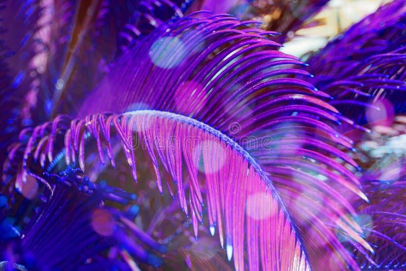 Moderiktig kulör naturlig blom- modell av palmblad i violett arkivbilder