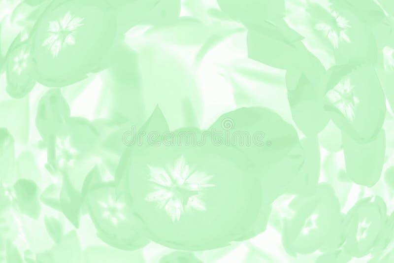 Moderiktig neo mintkaramellfärgbakgrund med den blom- modellen för delikata tulpan fotografering för bildbyråer
