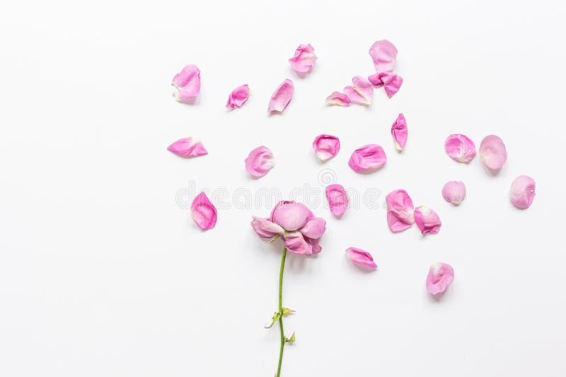 Moderiktigt kvinnaskrivbord i pastellfärgade färger med den rosa modellen för bästa sikt för kronblad royaltyfri foto