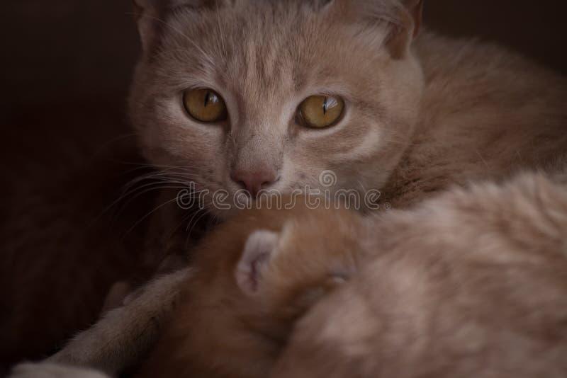 Moderkatt och kattungar fotografering för bildbyråer