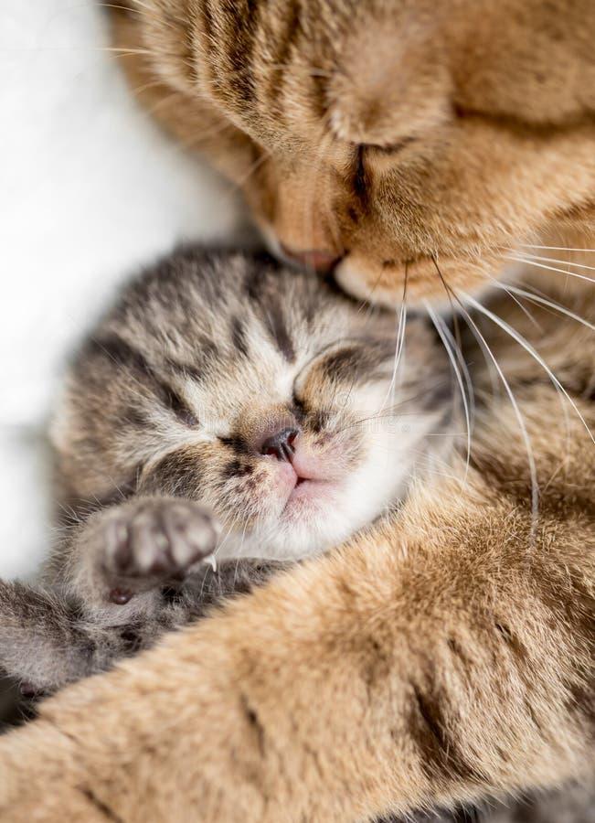 Moderkatt som kramar kattungen