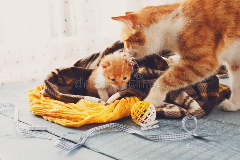 Moderkatten kommer till kattungen royaltyfri bild