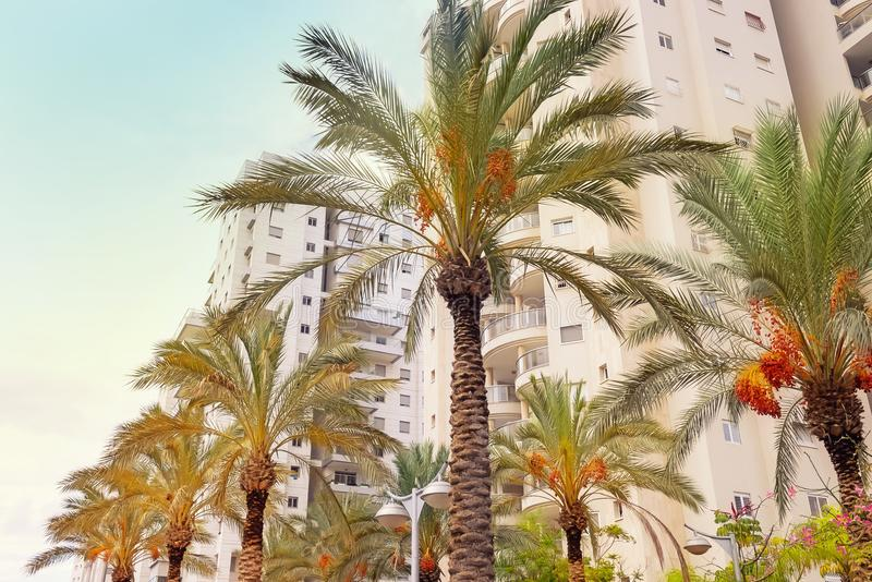 Modern apartment houses ready for settlement with date palms. Contemporary urban landscape. House building and city construction c stock photography
