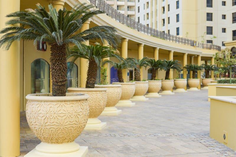 Modern arkitektur och konstruktion, landskapdesign, inre sikt av borggården med palmträd Sceniskt landskap med pers royaltyfri bild