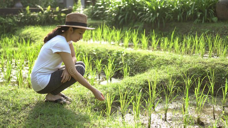 Modern Asian woman with hat at rice file, nature imerge lifestyle stock photo