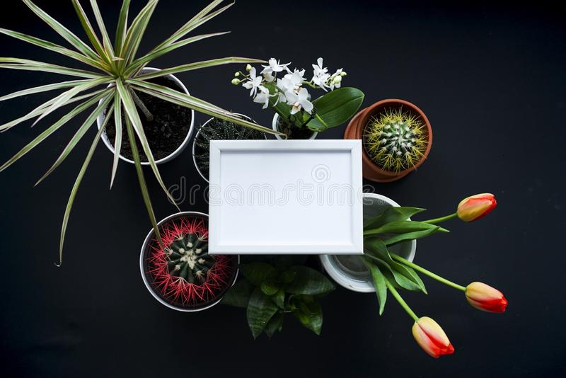 Picture frame mockup. Cactus, succulent plants, tulips, and decorative rocks. View from above royalty free stock image