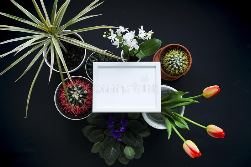Picture frame mockup. Cactus, succulent plants, tulips, and decorative rocks. View from above stock photo