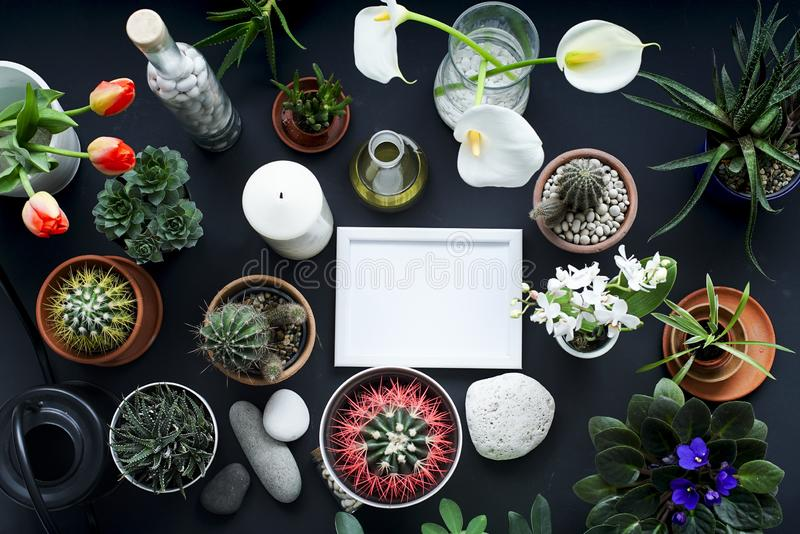 Picture frame mockup. Cactus, succulent plants, tulips, and decorative rocks. View from above stock photography