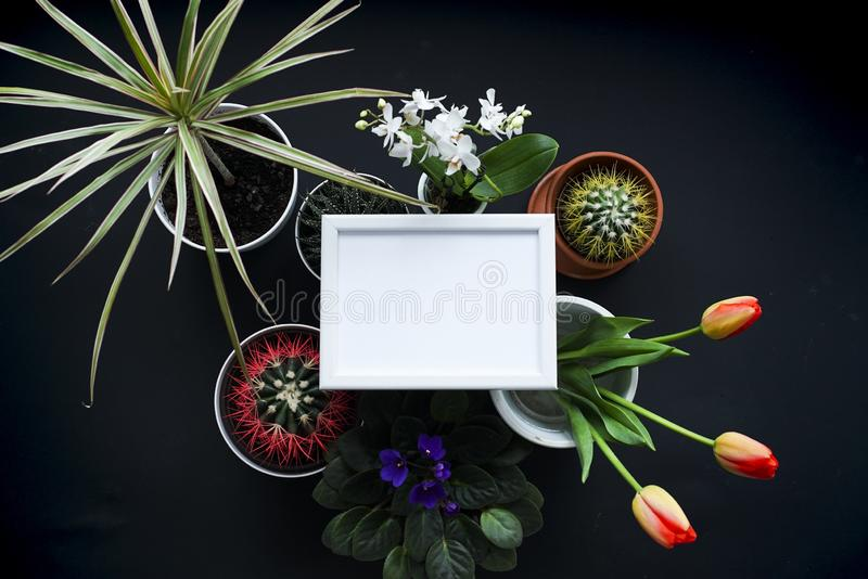 Picture frame mockup. Cactus, succulent plants, tulips, and decorative rocks. View from above stock image