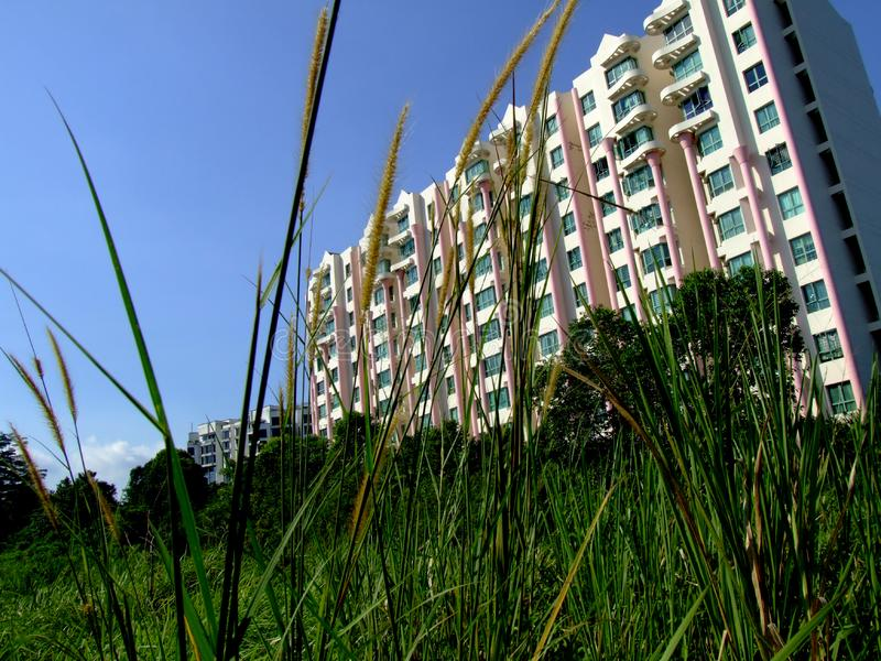 Modern building and grass