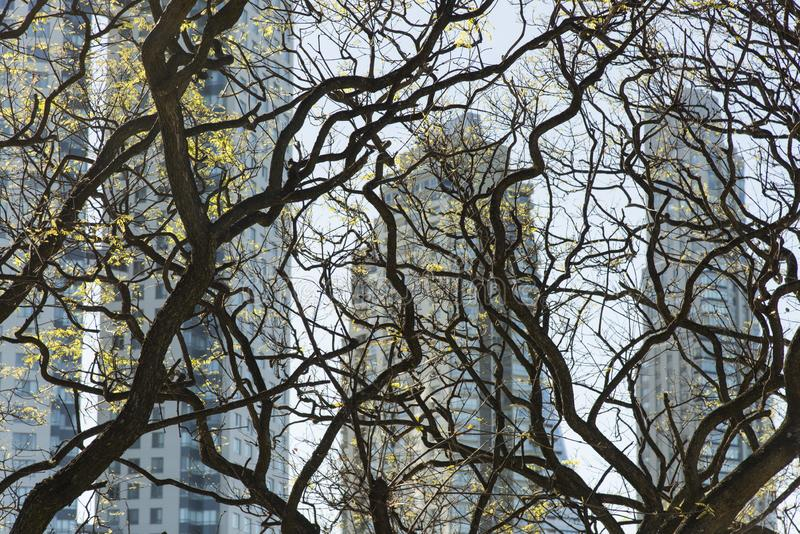 Modern buildings through twisted tree branches stock photography