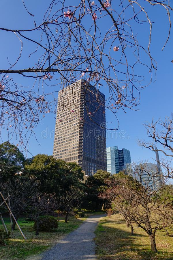 Modern buildings with Zen garden royalty free stock image