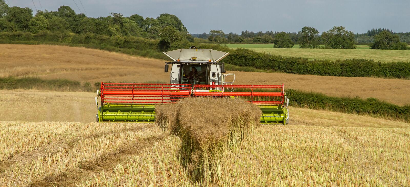 Modern claas combine harvester header cutting crops. Modern claas 770 combine harvester cutting crops oilseed working the field close up of header royalty free stock photo