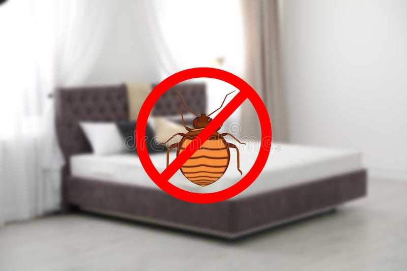 Modern clean mattress without bed bugs. In room royalty free stock image