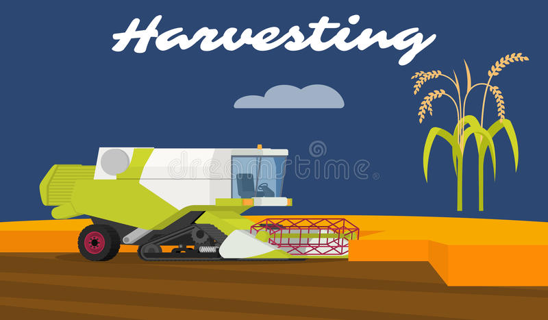 Modern combine harvester tractor working a rice field. vector illustration