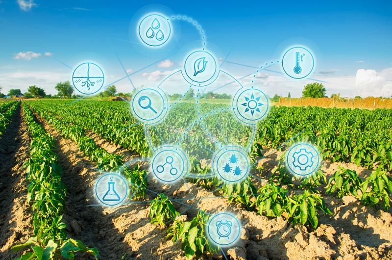 Modern farming. field of vegetables on a sunny day. Fresh green greens. Innovations and developments in agriculture. Scientific wo stock photos