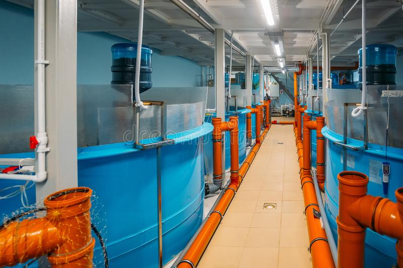 Modern fish farm with closed water circulation supply.  royalty free stock image