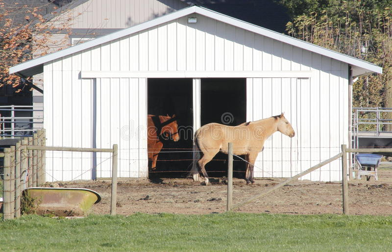 Modern Horse Barn or Stable stock photos