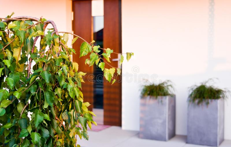 Modern house backyard detail with korean fir tree. In summer. Contemporary landscaping design abstract architecture. A young weeping tree royalty free stock images