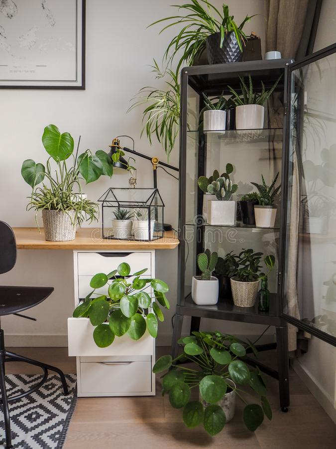 Modern industrial black and white study room with numerous green houseplants such as pancake plants and cacti. Creating an urban jungle feeling stock photography
