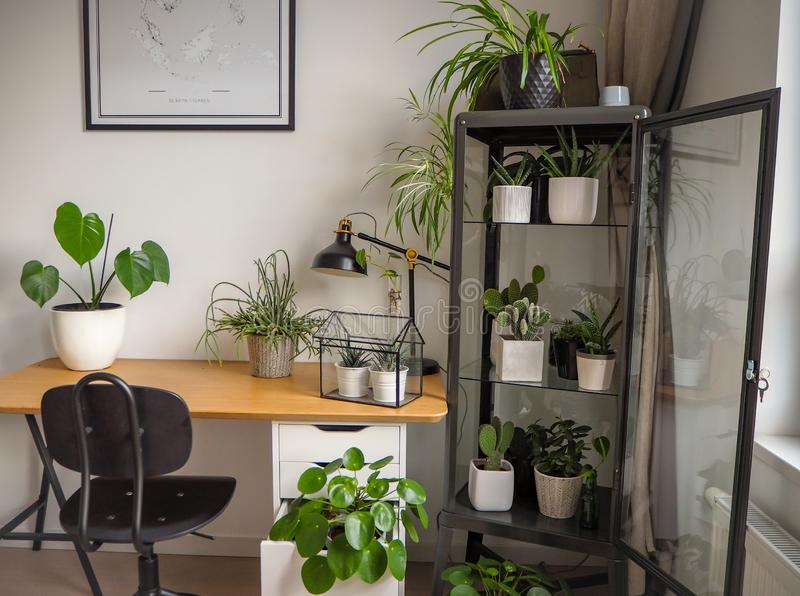Modern industrial black and white study room with numerous green houseplants such as pancake plants and cacti royalty free stock photography
