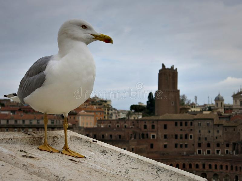 Seagull watching over the Palatine Hill in Rome. Seagull, Palatine Hill, Rome, Italy, UNESCO, Protection, World Heritage, Ruins, Emperor, Roman Empire stock photo