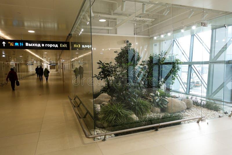 Modern inredesign med inomhus växter Simferopol flygplats 2019 Januari 01 arkivbild