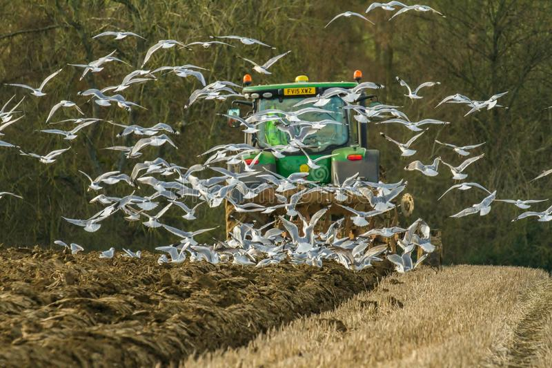 Modern John Deere tractor pulling a plough followed by gulls. Green modern John Deere tractor ploughing a field with plough working field followed by gulls stock images