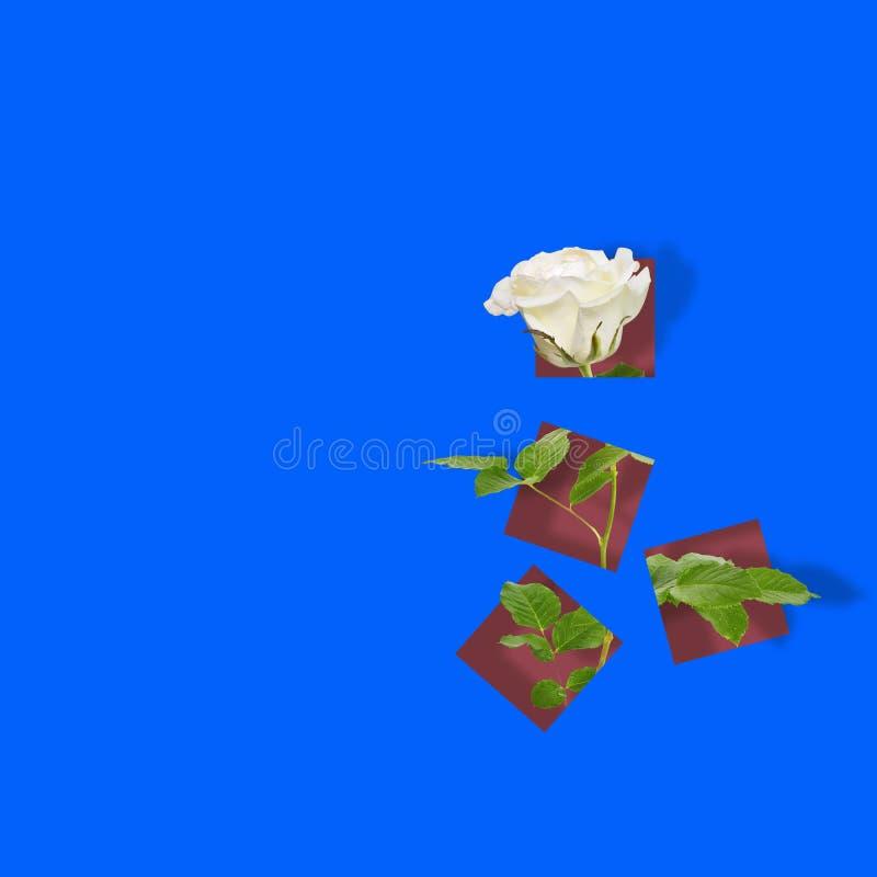 Modern modern konstaffisch med den härliga rosen på abstrakt färgrik bakgrund royaltyfri illustrationer