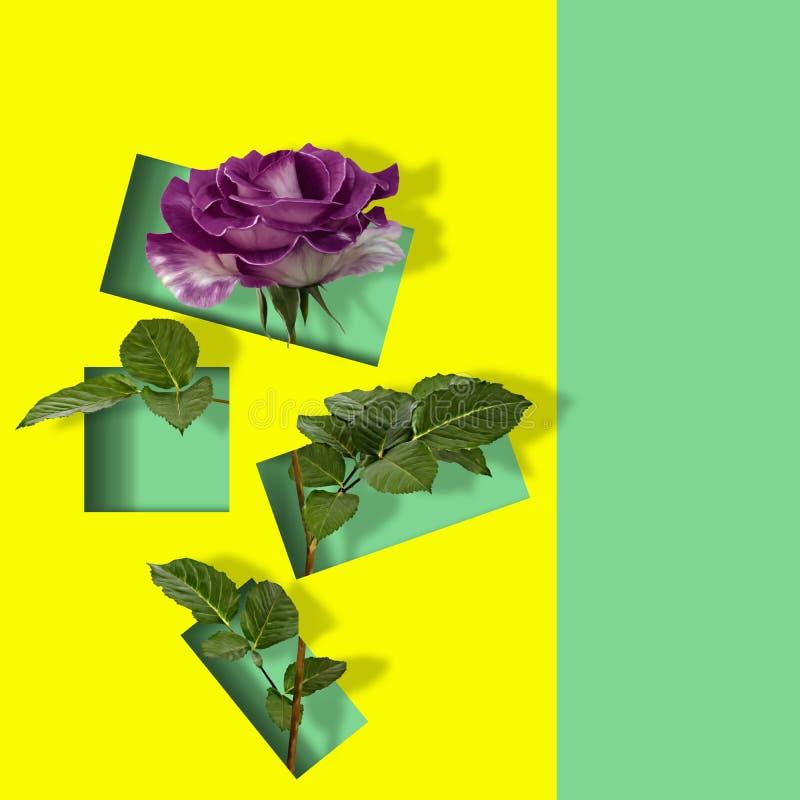 Modern modern konstaffisch med den härliga rosen på abstrakt färgrik bakgrund vektor illustrationer