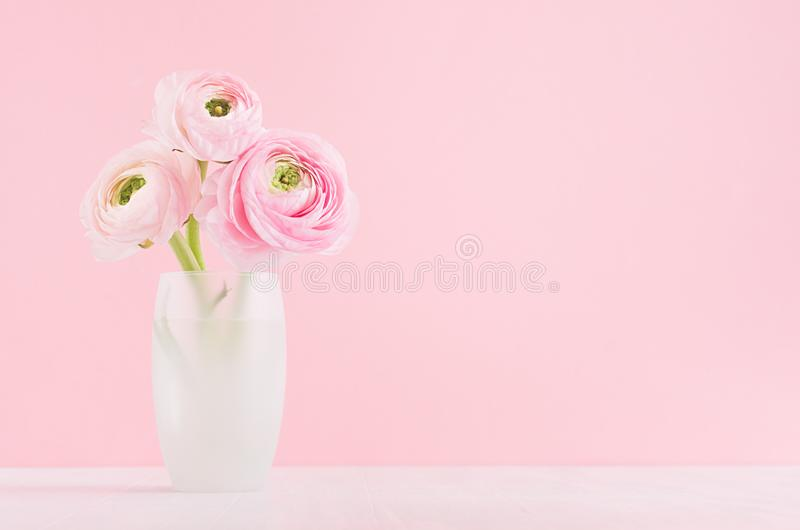 Modern minimalist bouquet of ranunculus in exquisite white frosted glass vase on white wood table and pastel pink color background royalty free stock photos