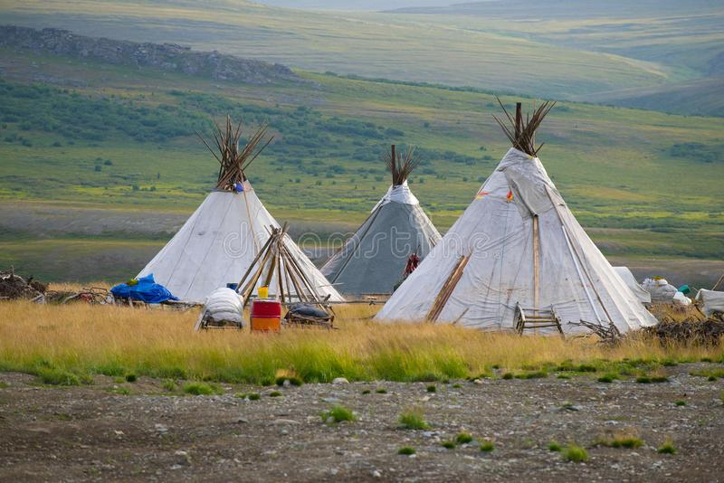 Modern nomad-reindeer herd camp on an early morning. Yamal, Russia. Modern nomad-reindeer herd camp on an early August morning. Yamal, Russia stock photo