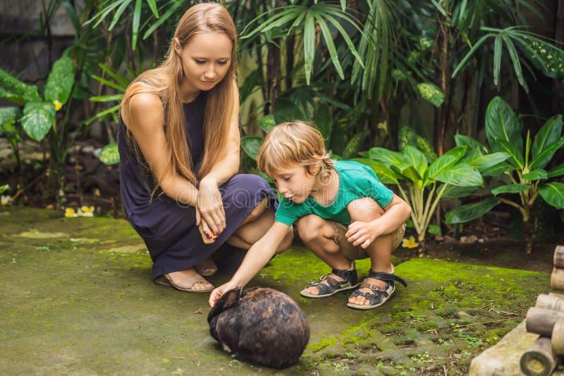 Modern och sonen matar kaninen Skönhetsmedel testar på kanindjur Fri grymhet och djurt missbrukbegrepp f?r stopp royaltyfria bilder