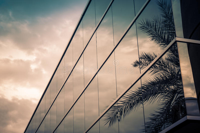 Modern office building. With palm tree reflecting in glass stock photo