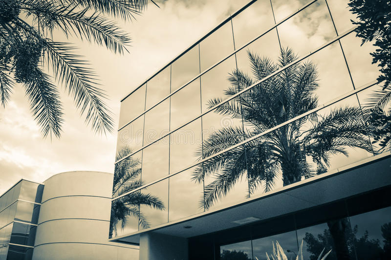 Modern office building. With palm tree reflecting in glass stock photos