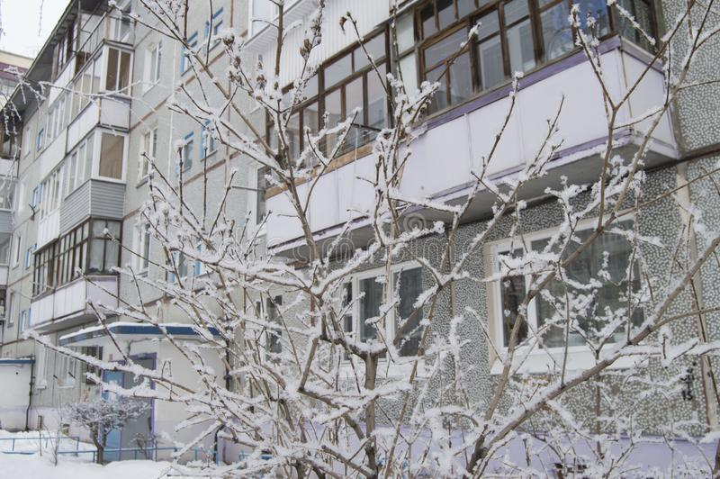 Modern residential building in the city with balconies visible through the snow-covered tree branches royalty free stock images