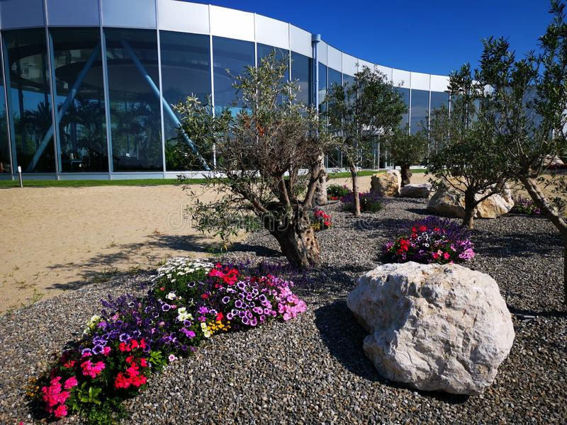 Modern resort spa and flowers garden colored. Among olive trees - gardening among olive groves royalty free stock photo