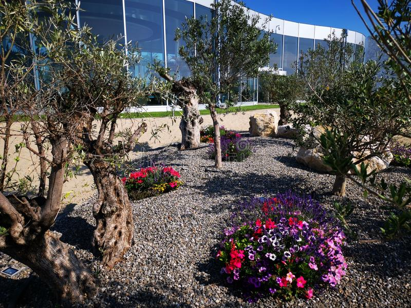 Modern resort with olive trees and flowers. Modern resort tropical with olive trees and colorful flowers in gravel stock photo