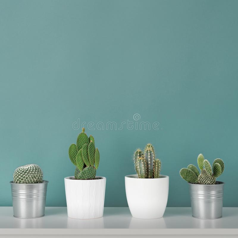 Collection of various potted cactus house plants on white shelf against pastel turquoise colored wall. Cactus plants background. Modern room decoration royalty free stock photography