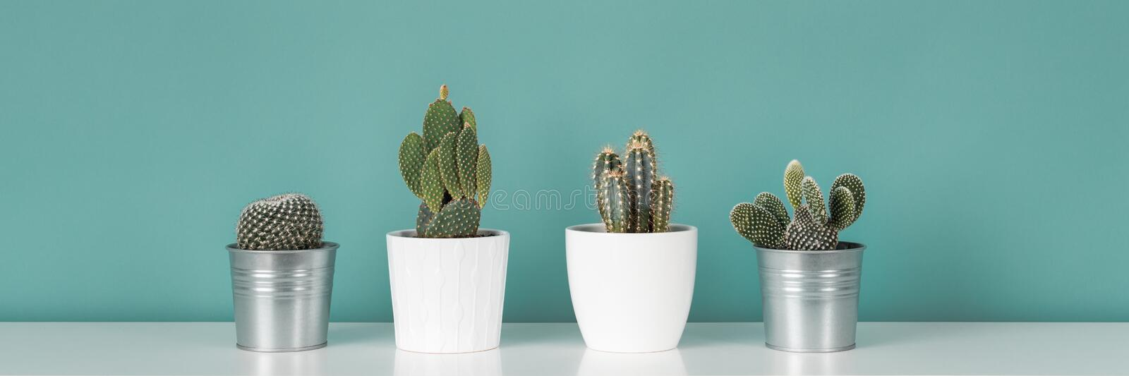 Collection of various potted cactus house plants on white shelf against pastel turquoise colored wall. Cactus plants banner. Modern room decoration. Collection royalty free stock photos